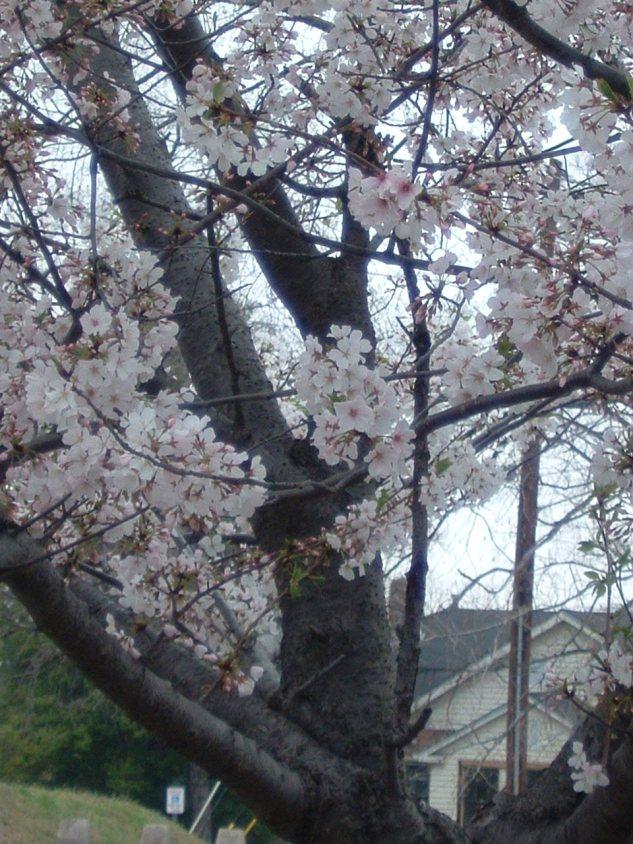 tree flowers